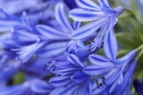 striped blue flowers close up