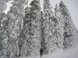 Ski tour in the forest