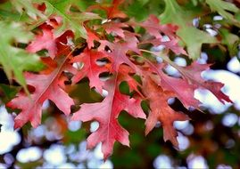 delightful autumn red foliage