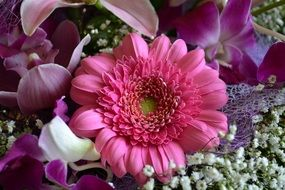 Beautiful blooming gerbera flowers
