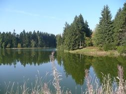 panorama of forest pond