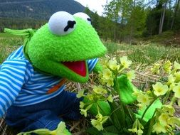 toy frog kermit in nature