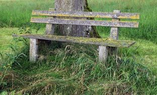 wooden bench near the tree