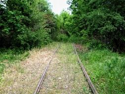 abandoned railway in the green forest