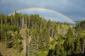 rainbow over yellowstone forest