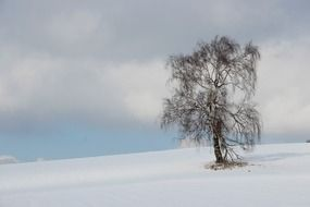 lonely tree in the middle of winter