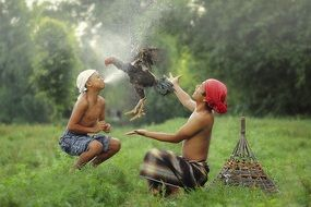 child indonesian and chicken