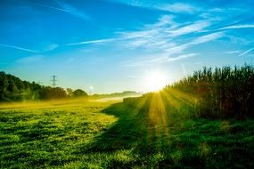 bright sun in the morning green field
