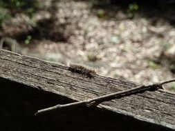 caterpillar on a wooden surface close up