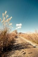 tall grass along a rural road
