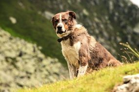 domestic dog in mountains