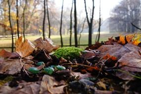 autumn moss leaves