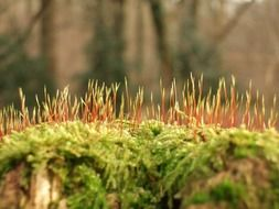 macro photo of moss in spring