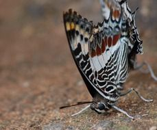 macro photo of butterfly on a ground