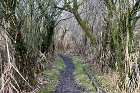 walk path in thicket