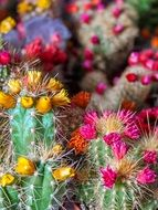 blooming cactus flower colorful scene