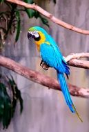 colorful long-tailed macaw
