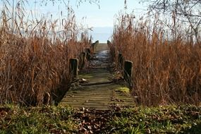 boardwalk through reed thickets to water at fall