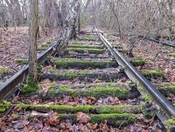 old moss covered rails in the forest