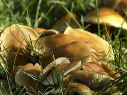 Forest mushrooms among green grass