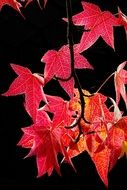 Red autumn leaves on a tree branch