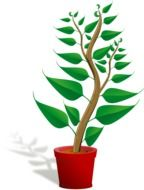 Green potted plant sapling