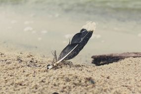 bird feather on sand beach at water