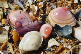colorful seashells on the shore of the Baltic Sea