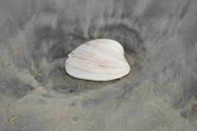 white seashell on sand beach
