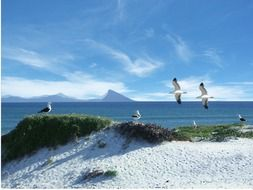 seagulls on white sand dune at blue sea, south africa, western cape