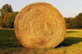 harvested hay bale