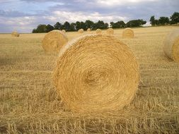 absolutely gorgeous straw bales