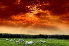 a herd of cattle under the clouds