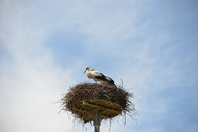 storchennest nest with storks
