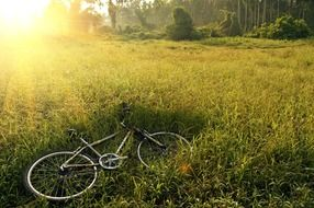 bicycle lies on green grass