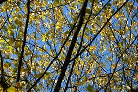 tree leaves in sunny autumn day