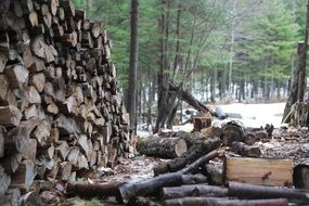 wood logs stack pile winter forest