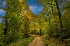 path in forest autumn trees colorful