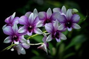 tropical orchid purple
