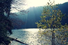 bright sun over a lake among the forest