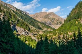 panorama of green forest and hills in the Alps