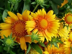 decorative yellow orange sunflowers