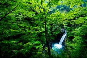 small waterfall in wild green forest