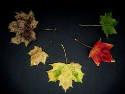 colored autumn leaves on a black background