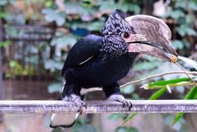 hornbill bird in wildlife