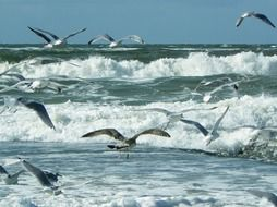 a flock of seagulls flies over the north sea