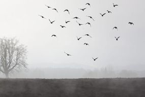 fog and a flock of birds in the sky landscape