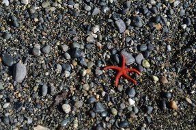 red starfish on pebbles