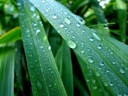Raindrops on a green leaves