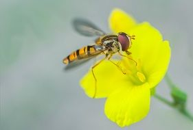 insect on a bright yellow flower closeup